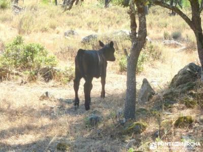 Puentes romanos Valle del Tiétar; viajes en agosto;singles madrid senderismo
